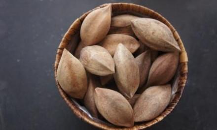 Leadership Secrets from Albay: Pili Nuts